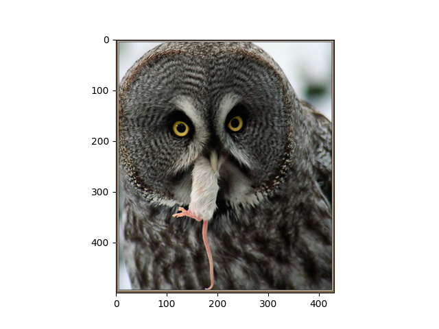 Prepare the ImageNet dataset — gluoncv 0 6 0 documentation