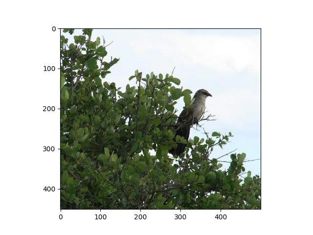Prepare the ImageNet dataset — gluoncv 0 6 0 documentation
